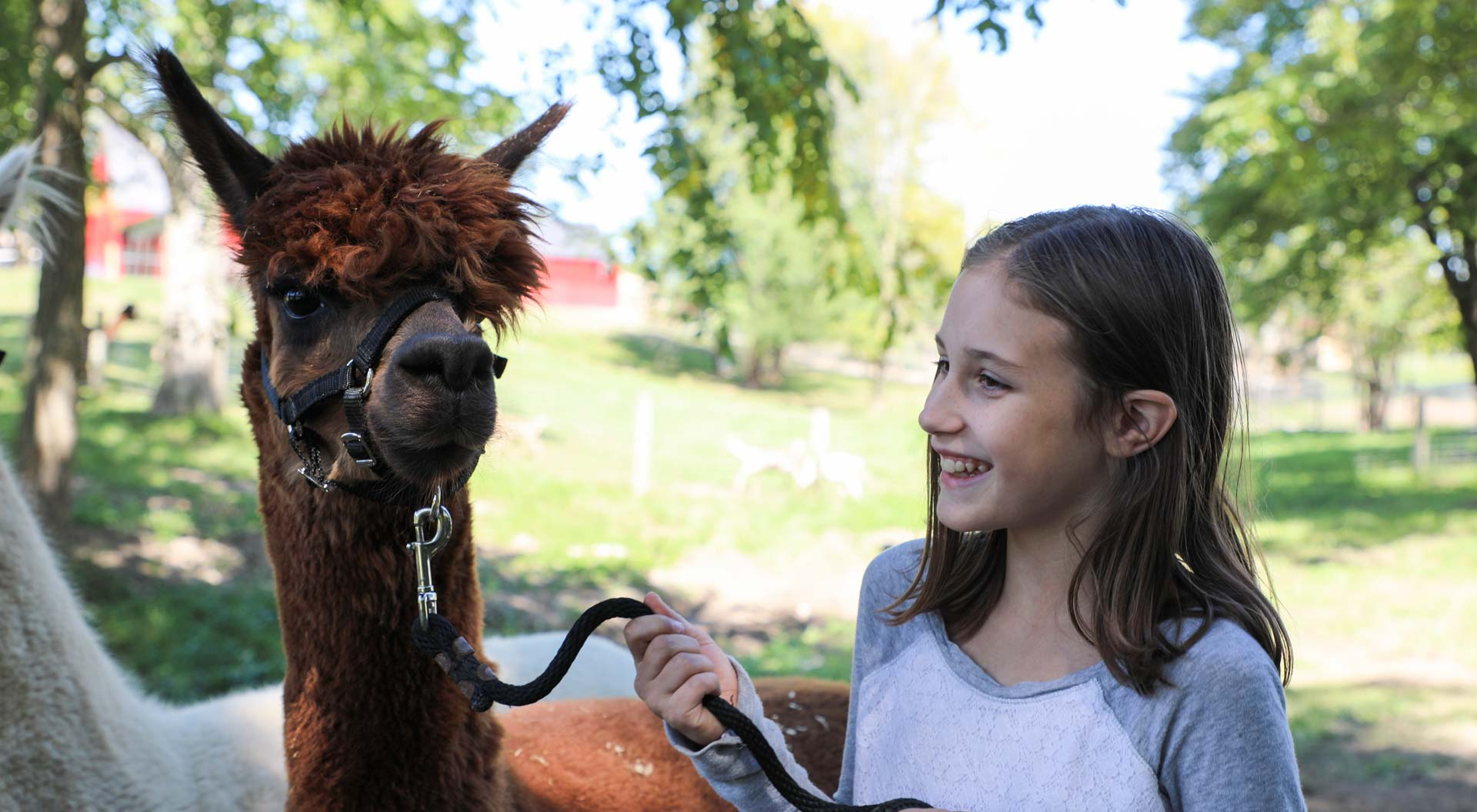 Alpaca-with-young-girl